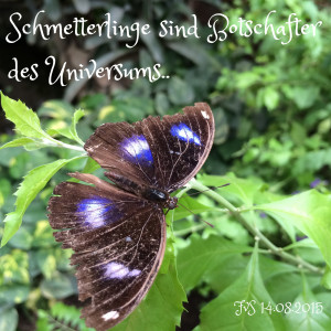 1-FvS_2015_Schmetterling