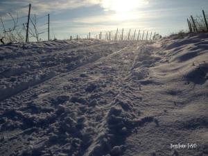 FvS_12_Wintereinzug